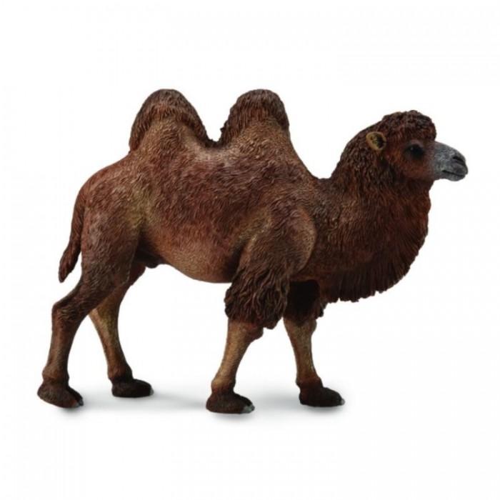 Фото - Игровые фигурки Collecta Двугорбый верблюд L игровые фигурки collecta карликовый бегемот l