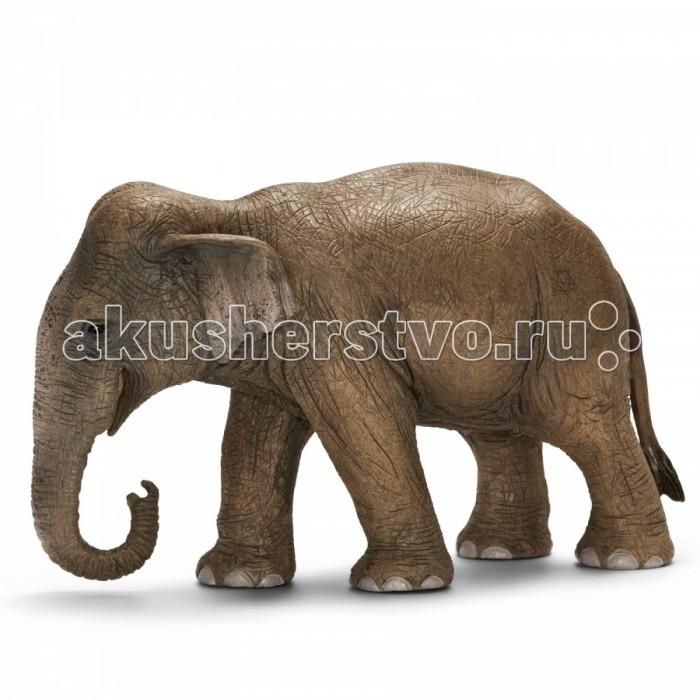 Игровые фигурки Schleich Игровая фигурка Азиатский слон самка игрушки животные tour the world schleich