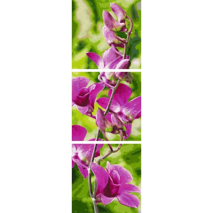 Творчество и хобби , Картины по номерам Schipper Картина по номерам Триптих Орхидеи 120х40 см арт: 261720 -  Картины по номерам