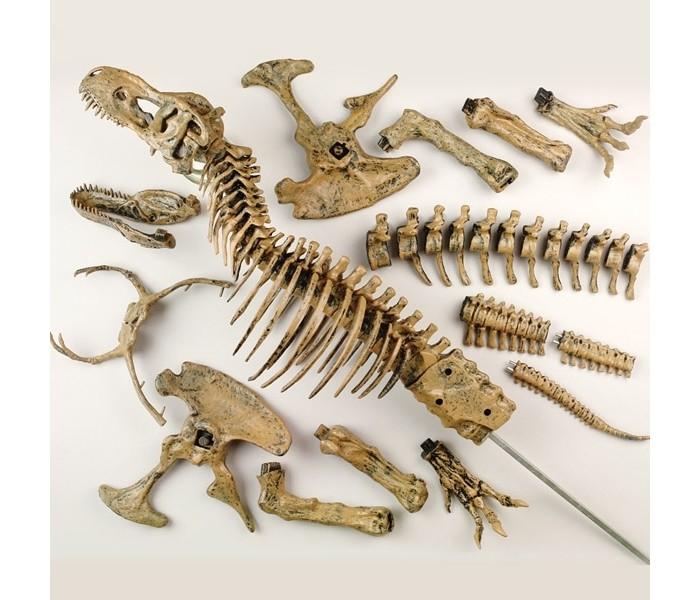 Творчество и хобби , Наборы для творчества Edu-Toys Набор Cкелет динозавра 91 см арт: 399274 -  Наборы для творчества