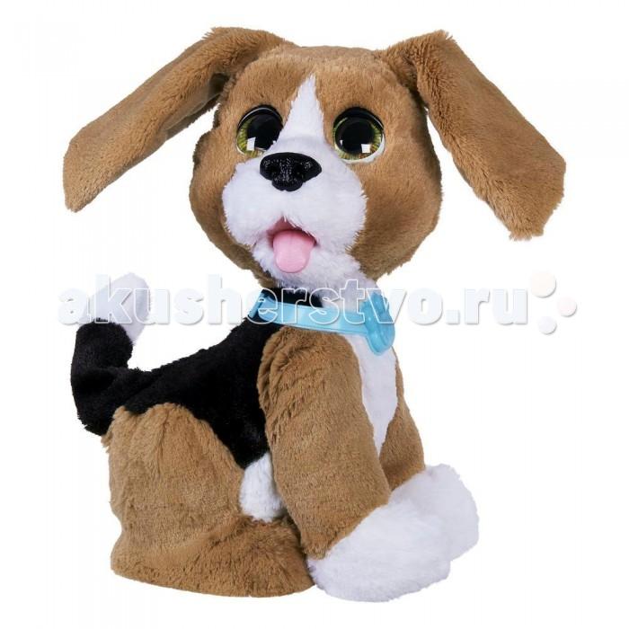 Интерактивная игрушка FurReal Friends Говорящий щенокГоворящий щенокFurRealFrends Говорящий щенок - этот интерактивный говорящий щенок породы бигль - неимоверно болтливый питомец, который не только обожает задорно лаять на всех вокруг, но и будет рад поговорить по душам, он знает немногим более 80 фраз, которые он с радостью произносит на русском языке сквозь забавное гавканье, когда слышит знакомые ему слова. В тот момент, когда Чарли успешно распознает речь своего хозяина, на его шее начинает светиться голубенький значок в виде лапки, расположенный на ошейнике.  Помимо звуковой функциональной составляющей, игрушка может похвастаться возможностью движения, а также механическим изменением положения передних лапок питомца. Интерактивный щенок умеет двигать головой вправо и влево, а также шевелить своими большими ушками, невероятно трогательно и потешно закрывая ими глаза! Если погладить собачку по спине, то он будет довольно вилять хвостиком. Стоит же потянуть игрушечного бигля за передние лапки, как они практически полностью выпрямятся, дав возможность перевести свою любимую болтливую зверюшку FurReal по имени Чарли в положение лежа. С этой игрушкой ребенок без труда сможет развить много полезных навыков, вроде тактильного восприятия, а также научится вместе с ней заботиться о животных.   Выполнен из высококачественных материалов на самом современном оборудовании.<br>