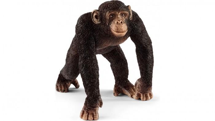 Игровые фигурки Schleich Игровая фигурка самка Шимпанзе фигурки игрушки schleich жираф самка