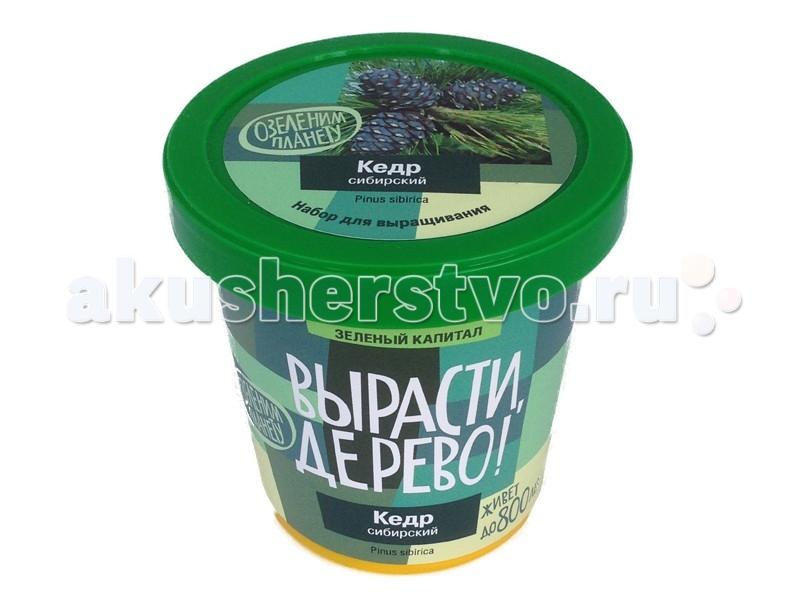Наборы для выращивания Вырасти, дерево! Набор для выращивания! Кедр сибирский фисташковое дерево семена на украине