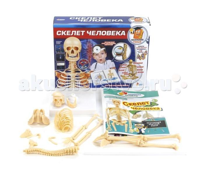 Наборы для творчества Играем вместе Опыты: Скелет человека наглядное пособие eastcolight скелет человека