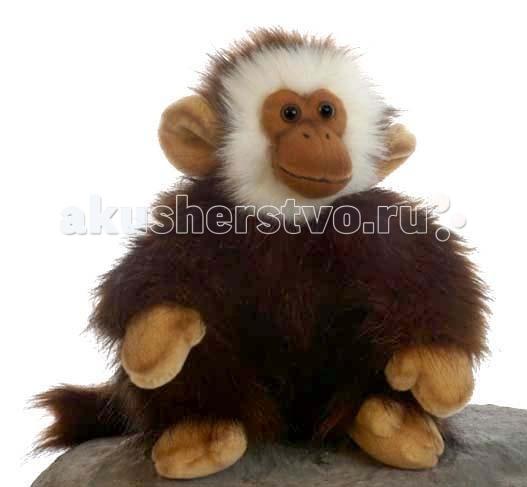 Мягкая игрушка Hansa Обезьянка 28 смОбезьянка 28 смОбезьянка, 28 см.  Игрушки Ханса изготовлены из искусственного меха очень приятного на ощупь, внутри имеют титановый каркас. Наличие каркаса позволяет изменять положение лап и туловища, а также поворачивать голову. Игрушки полностью копируют оригинал и могут быть выполнены в натуральную величину. На крупно габаритных игрушках ослик, лошадка и проч., размером от 1 можно сидеть верхом.   Благодаря прочному каркасу, они выдерживают вес до 65-70кг. Компания Hansa была основана в 1972 году на Филиппинах мистером Хансом Акстельмом и в прошлом году отметила свой 40 летний юбилей. 7 мировыч обществ охраны природы признали мягкие игрушки фирмы Ханса самыми натуралистичными моделями животных .  Мягкие игрушки Ханса: абсолютно реалистичные жирафы, слоны, коалы и медведи, изготовленные из экологически чистых материалов, сертифицированные как детские игрушки, могут так же стать великолепным украшением любого интерьера – от оформления комнаты до торгового зала, офиса, ресторана, шоу-программы или праздничной вечеринки.  Игрушки HANSA идеальны для модных интерьеров в африканском или японском стиле. Благодаря своей реалистичности игрушки Hansa имеют огромное природоохранное значение - они позволяют любоваться дикими животными, сохраняя им жизнь. Отдельная линия анимированных декоративных композиций дает возможность создавать эффектные экспозиции для выставок, презентаций, витрин и проч. Мягкие анимированные игрушки нередко делаются на заказ, для конкретных интерьеров и событий. В ассортименте hansa игрушки более 3000 наименований: от райских птичек и мышей 5 см до слонов и жирафов 4,5 м.<br>