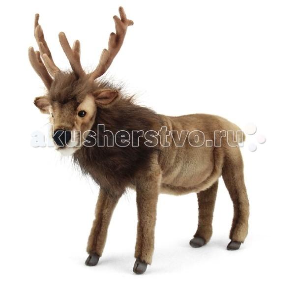 Мягкая игрушка Hansa Северный олень коричневый 35 смСеверный олень коричневый 35 смСеверный олень коричневый 35 см.  Игрушки Ханса изготовлены из искусственного меха очень приятного на ощупь, внутри имеют титановый каркас. Наличие каркаса позволяет изменять положение лап и туловища, а также поворачивать голову. Игрушки полностью копируют оригинал и могут быть выполнены в натуральную величину. На крупно габаритных игрушках ослик, лошадка и проч., размером от 1м можно сидеть верхом.   Благодаря прочному каркасу, они выдерживают вес до 65-70кг.Компания Hansa была основана в 1972 году на Филиппинах мистером Хансом Акстельмом и в прошлом году отметила свой 40 летний юбилей.7 мировыч обществ охраны природы признали мягкие игрушки фирмы Ханса самыми натуралистичными моделями животных .  Мягкие игрушки Ханса: абсолютно реалистичные жирафы, слоны, коалы и медведи, изготовленные из экологически чистых материалов, сертифицированные как детские игрушки, могут так же стать великолепным украшением любого интерьера – от оформления комнаты до торгового зала, офиса, ресторана, шоу-программы или праздничной вечеринки.  Игрушки HANSA идеальны для модных интерьеров в африканском или японском стиле. Благодаря своей реалистичности игрушки Hansa имеют огромное природоохранное значение - они позволяют любоваться дикими животными, сохраняя им жизнь.Отдельная линия анимированных декоративных композиций дает возможность создавать эффектные экспозиции для выставок, презентаций, витрин и проч. Мягкие анимированные игрушки нередко делаются на заказ, для конкретных интерьеров и событий. В ассортименте hansa игрушки более 3000 наименований: от райских птичек и мышей 5 см до слонов и жирафов 4,5 м.  Hansa 6189 Игрушка мягкая Северный олень коричневый, 35 см. Hansa 6189 Игрушка мягкая Северный олень коричневый, 35 смТорговая марка Hansa стала широко известной и популярной практически во всем мире и получила множество международных призов. Игрушки максимально точно копируют оригинал и могут быть выпо