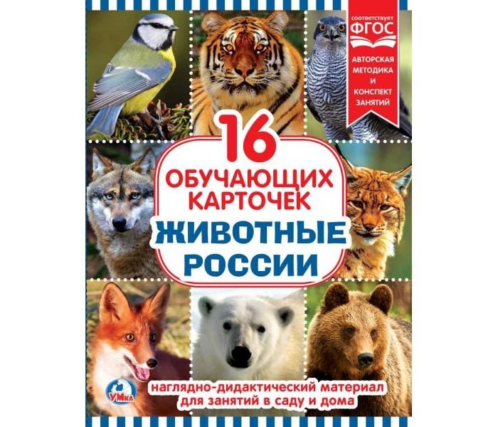 Раннее развитие Умка Обучающие карточки Животные россии умка обучающие карточки лунтик логические цепочки