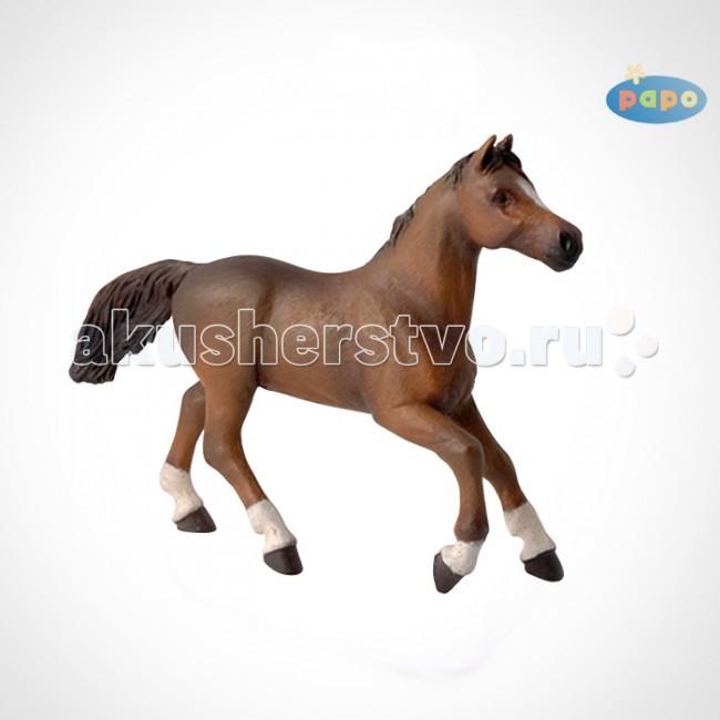 Игровые фигурки Papo Игровая реалистичная фигурка Англо-арабская лошадь