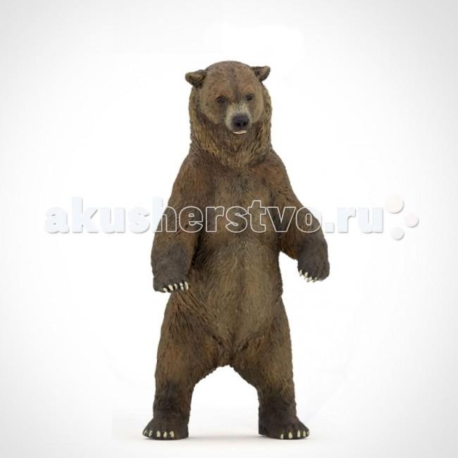 Игровые фигурки Papo Игровая реалистичная фигурка Медведь гризли