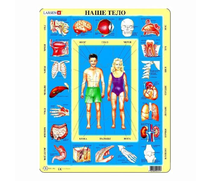 Картинка для Larsen Пазл Наше тело