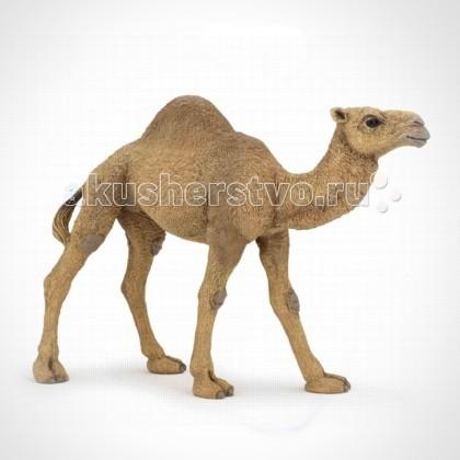 Papo Игровая реалистичная фигурка Одногорбый верблюд