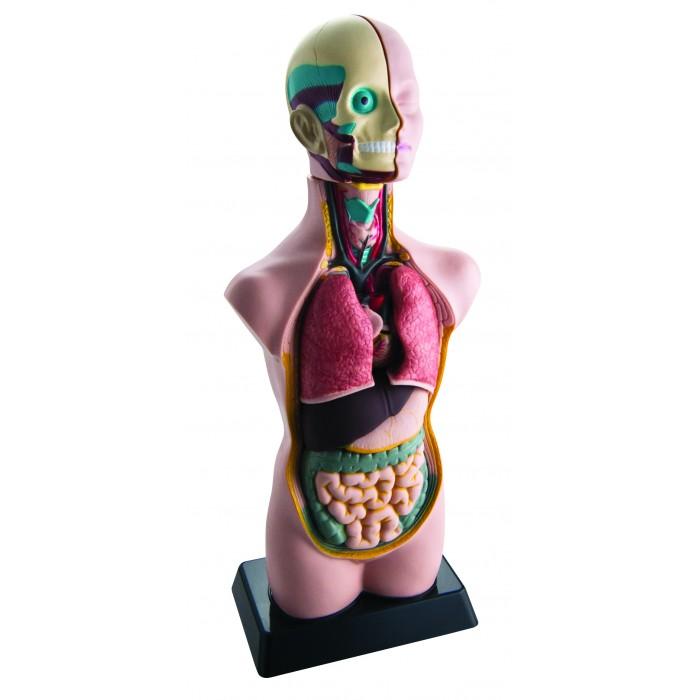 Edu-Toys Анатомический набор тело и органы 50 см