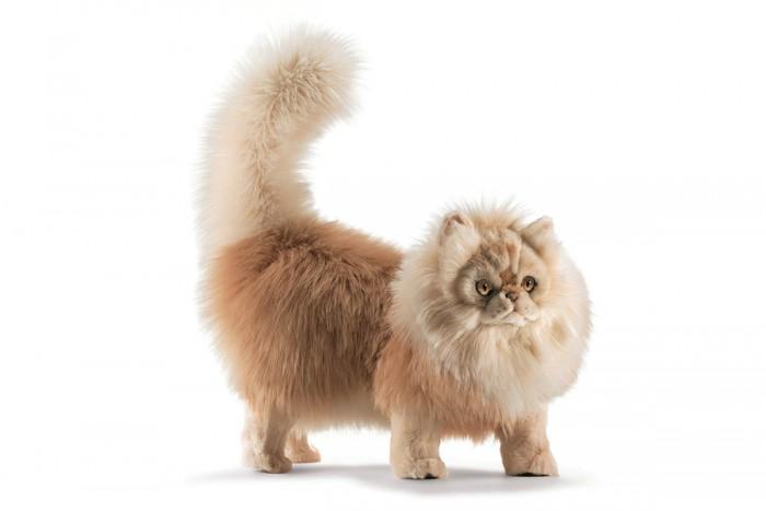 Картинка для Мягкая игрушка Hansa Персидский кот Табби 45 см