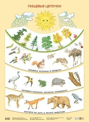 Обучающие плакаты Мозаика-Синтез Обучающий плакат Пищевые цепочки