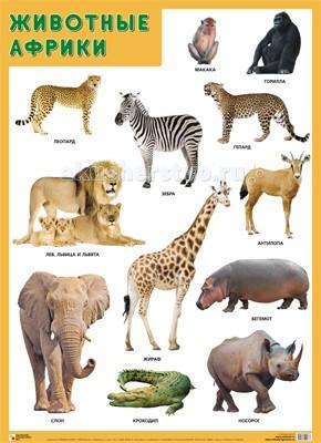 Обучающие плакаты Мозаика-Синтез Обучающий плакат Животные Африки напольная акустика polk audio s50 white