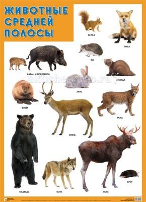 Обучающие плакаты Мозаика-Синтез Обучающий плакат Животные средней полосы