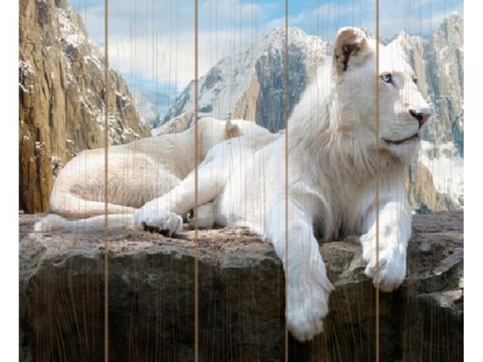 Купить Картины по номерам, Molly Картина по номерам на дереве Белый лев 40х50 см