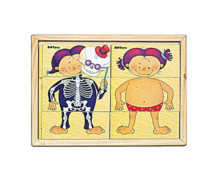 Деревянные игрушки RNToys Анатомия