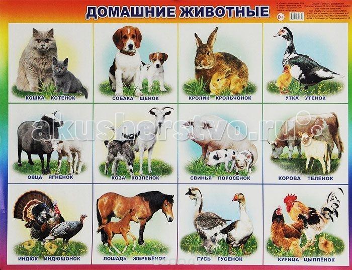 Фото Обучающие плакаты Алфея Плакат Домашние животные