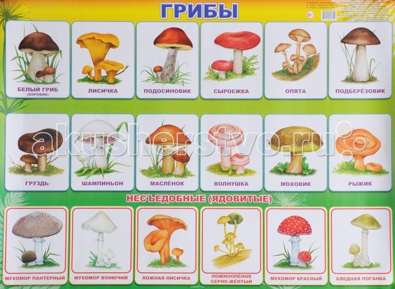 Обучающие плакаты Алфея Плакат Грибы обучающие плакаты алфея плакат грибы
