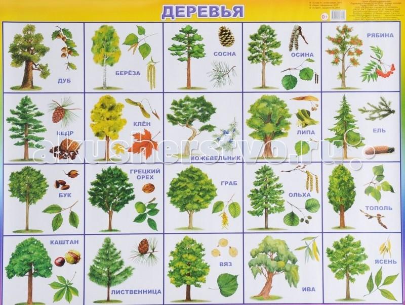 Обучающие плакаты Алфея Плакат Деревья обучающие плакаты алфея плакат азбука