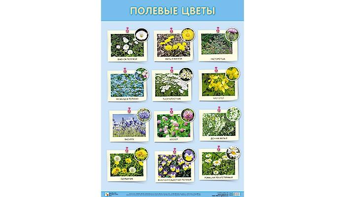 Обучающие плакаты Мозаика-Синтез ПЛ Полевые цветы плита grillver 400к пл