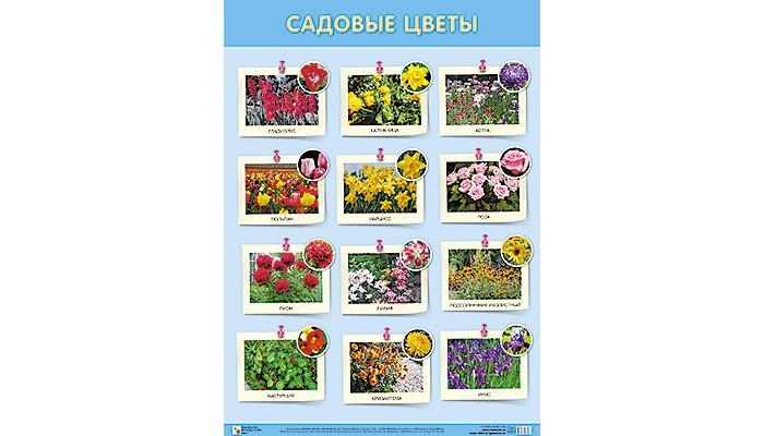 Обучающие плакаты Мозаика-Синтез Обучающий плакат Садовые цветы