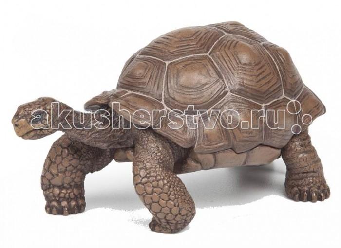 Игровые фигурки Papo Игровая реалистичная фигурка Галапагосская черепаха