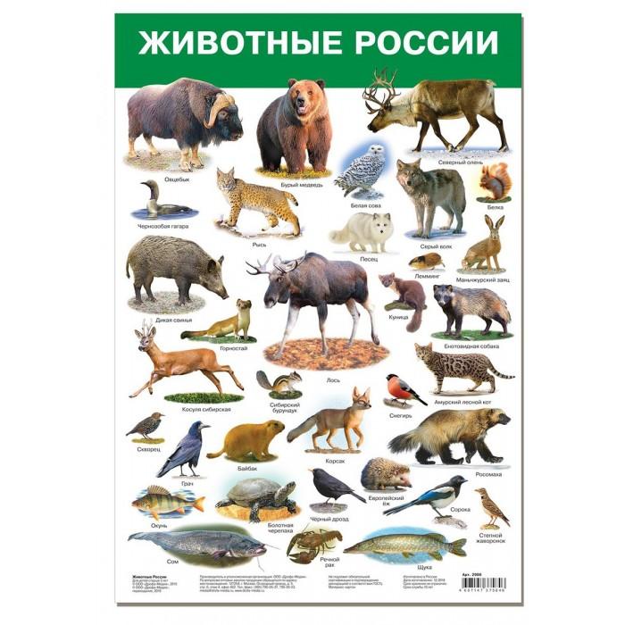 цена на Обучающие плакаты Дрофа Плакат Животные России