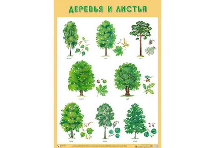 Обучающие плакаты Мозаика-Синтез Обучающий плакат Деревья и листья обучающие плакаты мозаика синтез обучающий плакат домашние птицы