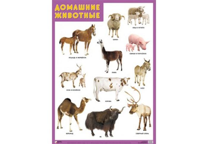 Обучающие плакаты Мозаика-Синтез Обучающий плакат Домашние животные