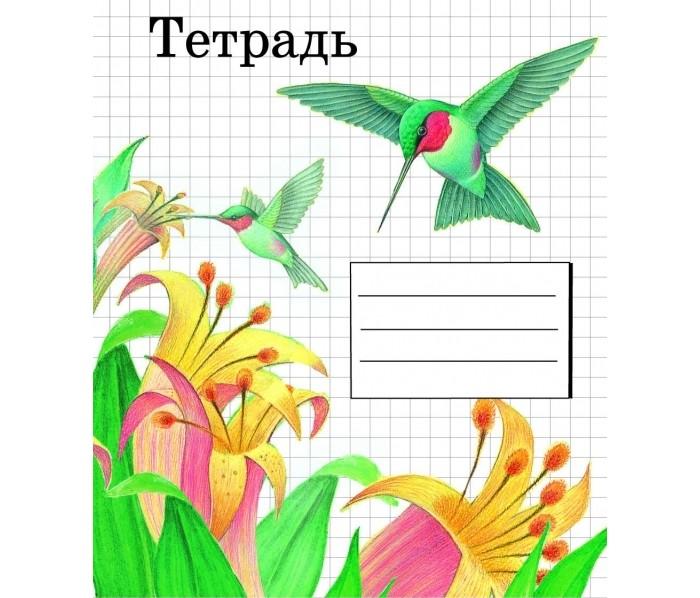 Тетради Стрекоза Тетрадь А5 (48 листов, линейка)