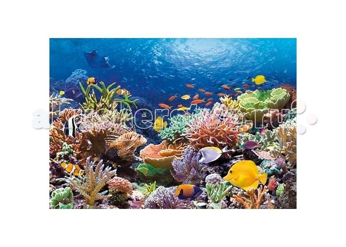 Пазлы Castorland Пазл Коралловый риф 1000 элементов паззл castorland 1000 эл 68 47см озеро канада