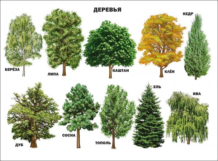 цена на Обучающие плакаты Проф-Пресс Плакат Деревья 978-5-378-03175-7