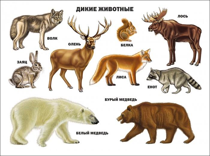 цена на Обучающие плакаты Проф-Пресс Плакат Дикие животные 978-5-378-03176-4