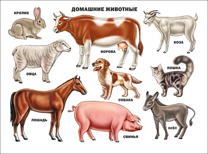 цена на Обучающие плакаты Проф-Пресс Плакат Домашние животные 978-5-378-03177-1