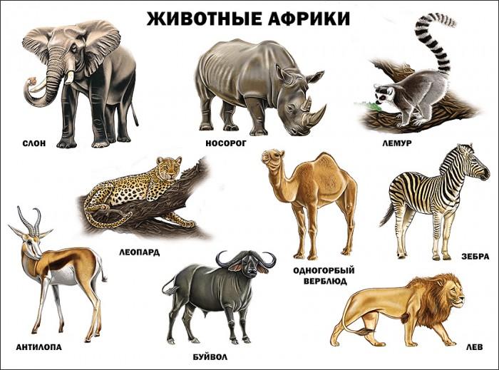 Обучающие плакаты Проф-Пресс Плакат Животные Африки 978-5-378-17364-8