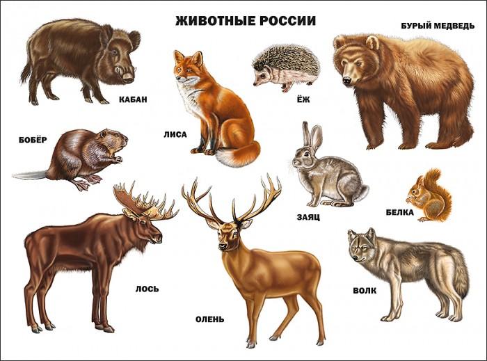 цена на Обучающие плакаты Проф-Пресс Плакат Животные России 978-5-378-07780-9