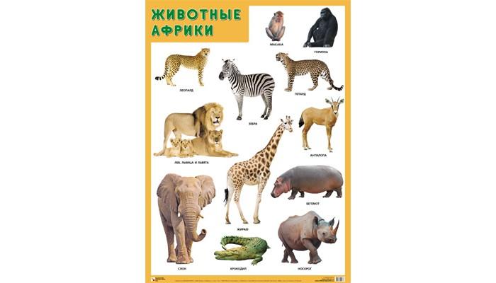 Обучающие плакаты Мозаика-Синтез Развивающие плакаты. Животные Африки ирина травина животные африки