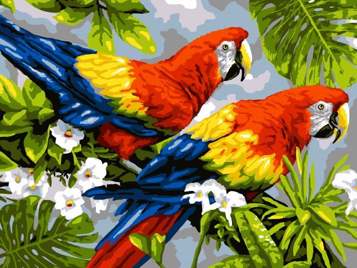 Lori Раскраска по номерам Пара попугаев — купить в Санкт ...