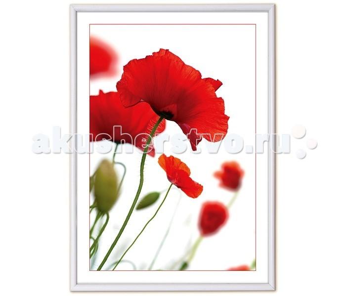 Фотоальбомы и рамки Veld CO Фоторамка Poster lux 21х29.7 см veld co
